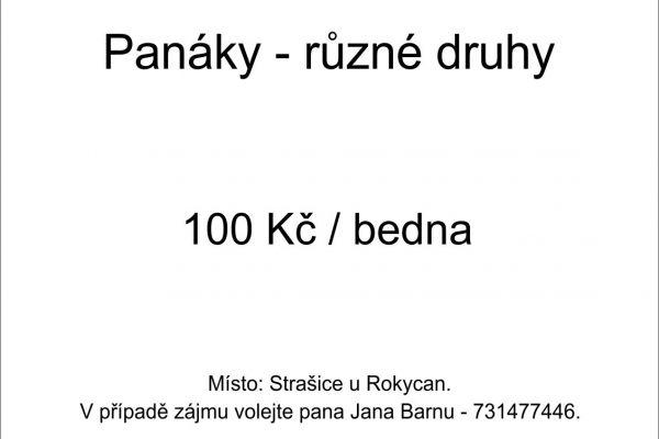 panaky89EAA010-B1E6-43F9-574E-07C6A9159D64.jpg
